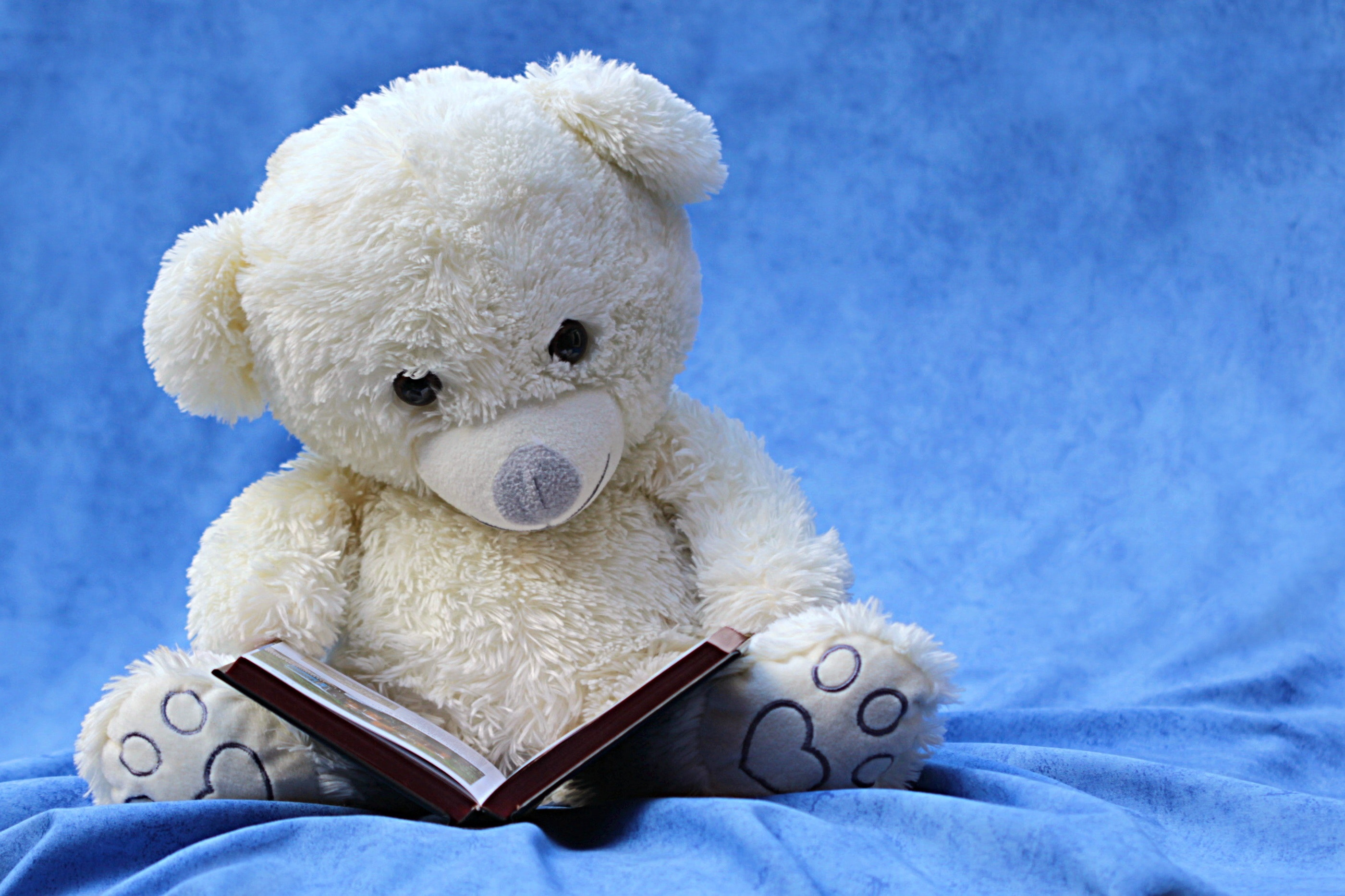A white teddy bear reading a book against a blue background.